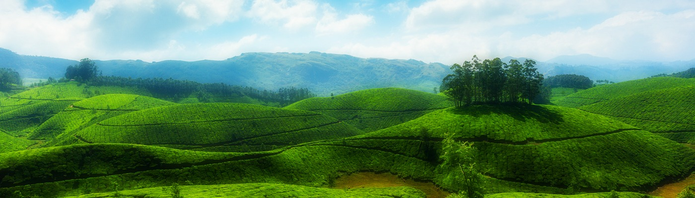 Taxi Service in Munnar